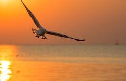 Bird flying above sea asia silhouette Stock Photo