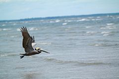 Bird Flying on Above on the Sea during Daytime Stock Image