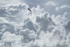 The bird is flying around and around in the cloudy sky royalty free stock images