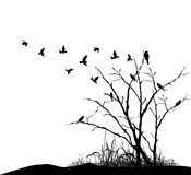 Bird flying around a tree branch Stock Photography