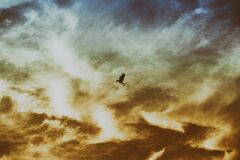 Bird Flying on Cloudy Sky Stock Photos