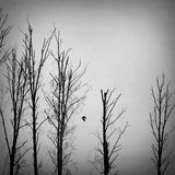 Bird flying among dry dead trees Royalty Free Stock Photos