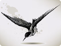 Bird flying, hand-drawing. Vector illustration. Stock Photos