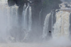Bird Flying At Iguazu Falls Stock Photos