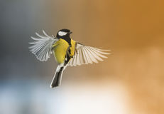 Bird flying with its wings outstretched. Forward stock photos
