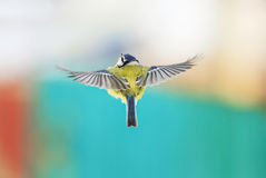 Bird flying with its wings outstretched Royalty Free Stock Photography