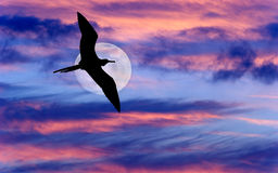 Bird Flying Moon Royalty Free Stock Photos