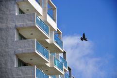 Bird flying near apartments Royalty Free Stock Photography
