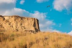 Bird flying near a hill. Stock Photos