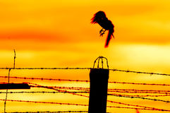 Bird flying off from prison fence Stock Images