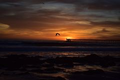 Bird flying into the orange cloudy sunset over the ocean stock photo