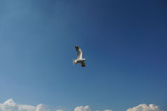 Bird flying over cloud space for text Stock Images