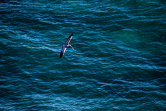 Bird flying over deep blue ocean Royalty Free Stock Photo