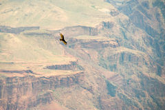 Bird flying over the grand canyon Royalty Free Stock Photos