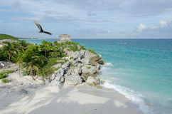 Bird flying over Mayan ruins at tulum,cancun,mexico. Ruins at the beach,tulum stock image