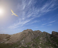 Bird flying over mountain area Stock Image