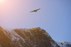 Bird flying over mountain  covered by snow Stock Image