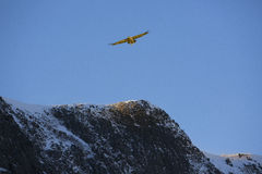 Bird flying over mountain  covered by snow Royalty Free Stock Photography