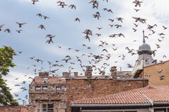 Bird flying over roofs Royalty Free Stock Photography