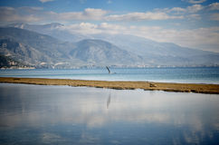 Bird Flying. Over the sea stock images