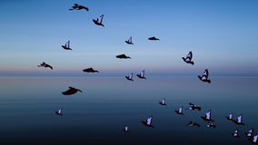 Bird flying over the sea animation background stock footage