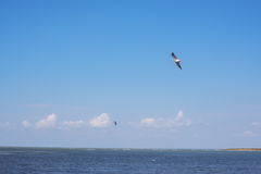 Bird flying over sea and on the horizon is seen kite Stock Photos