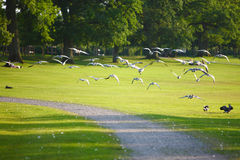 Bird flying in park Royalty Free Stock Photos
