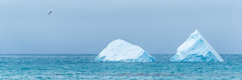 Bird flying past two icebergs at sea Royalty Free Stock Images