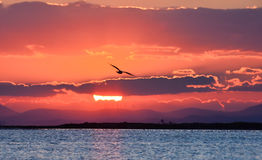 Bird flying on the sea at sunset, silhouette. Sun between clouds and seagull flying on the sea. Royalty Free Stock Images
