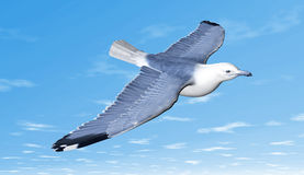 Bird flying. Seagull flying on blue sky Stock Photo