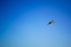 Bird flying the sky. Low angle view of bird flying the blue sky Stock Photos