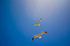 Bird flying the sky. Low angle view of bird flying the blue sky Stock Photography
