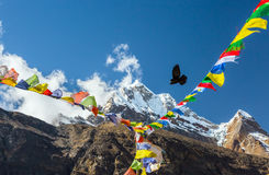 Bird flying in Sky between Nepalese prayer Flags in Himalaya Royalty Free Stock Photos