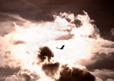 Bird flying through the storm Royalty Free Stock Photo