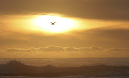 Bird flying in the sun. Unreal sunset on the beach with bird flying in the sun Stock Image