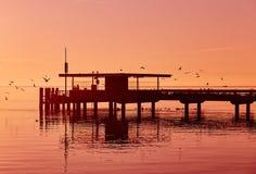 Bird Flying during Sunset Stock Photo