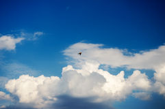 Bird flying to the blue sky royalty free stock images