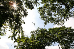Bird flying Stock Photography