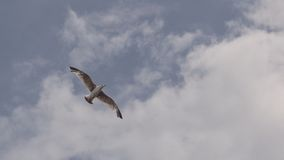 Bird Flying Under White Clouds Stock Images