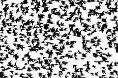 Bird flying Royalty Free Stock Photos