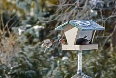 Bird flying with wings spread and birdhouse Stock Photos
