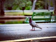 Bird. Focus, zoo, outdoor, art royalty free stock photo