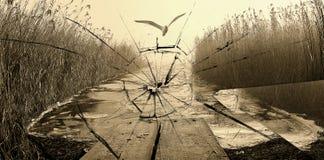 Bird on foggy beach and broken glass Stock Photos