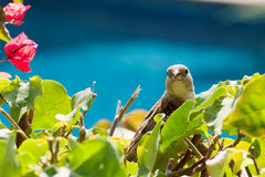 Bird in foliage Stock Photos