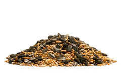 Bird food Stock Image