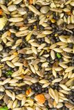 Bird Food Royalty Free Stock Photography