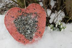 Bird food in the snow royalty free stock photography