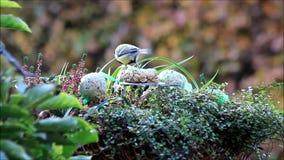 Bird food, tit, winter, fodder in a flower basket stock footage
