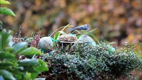 Bird food in winter - fodder in a flower basket stock footage