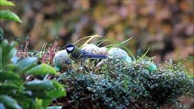 Bird food in winter - fodder in a flower basket stock video